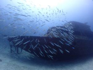 ラチャヤイ島 沈船とカマス