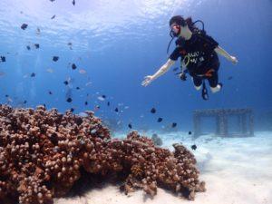 ラチャヤイ島サンゴ礁の魚と遊ぶ
