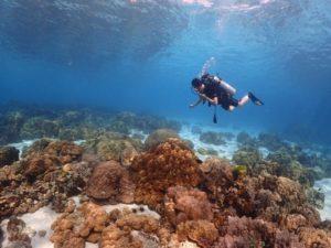 ラチャヤイ島 浅場のサンゴ礁を泳ぐ