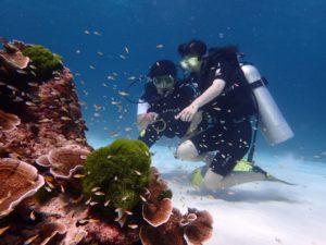 ラチャノイ島 魚と遊ぶ