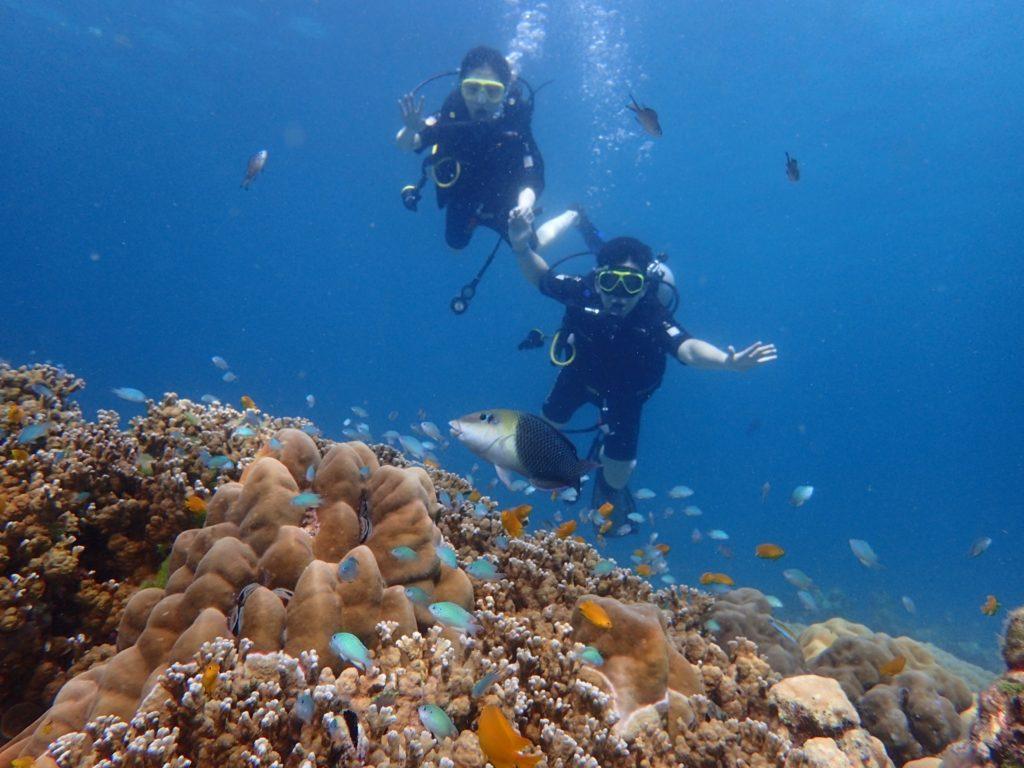 ラチャヤイ島 サンゴ礁とスズメダイ