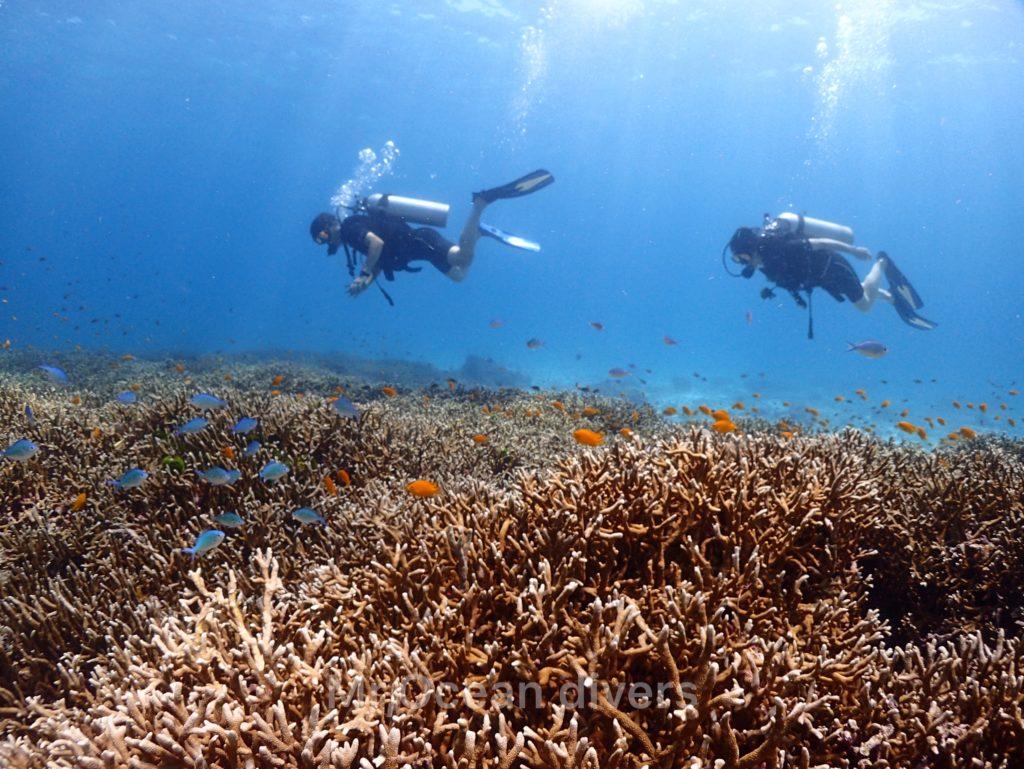 ラチャノイ島のサンゴ礁の上を泳ぐダイバー