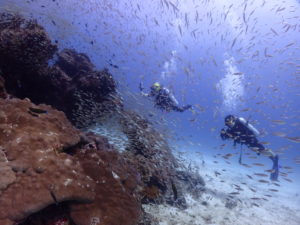 小魚の群れに囲まれながら写真をとるダイバー