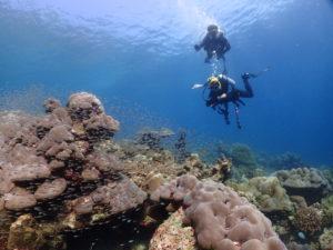 綺麗なサンゴ礁を泳ぐダイバー