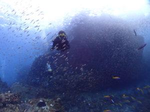 小魚が群れる水中を泳ぐダイバー