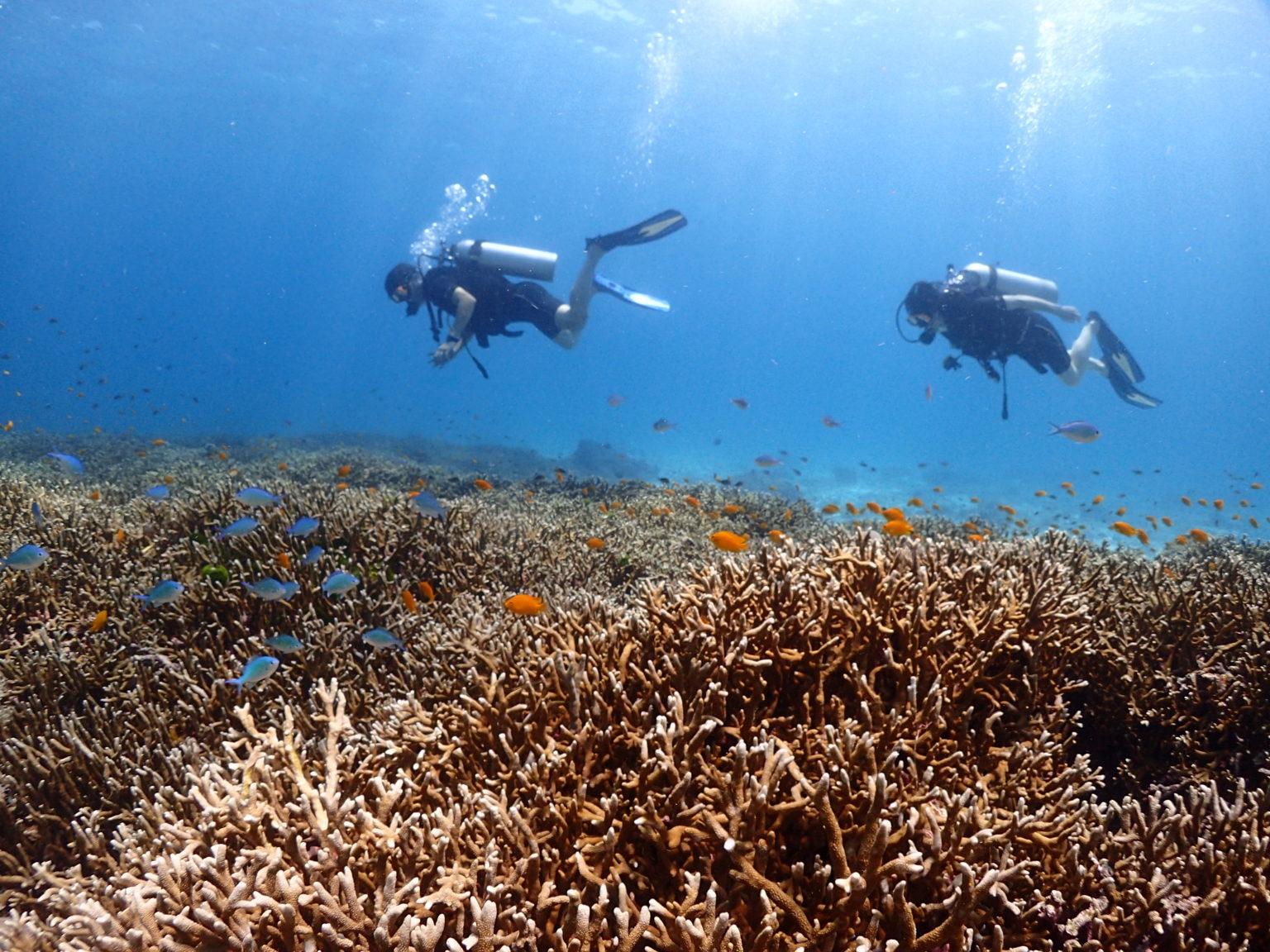 サンゴ礁と泳ぐダイバー