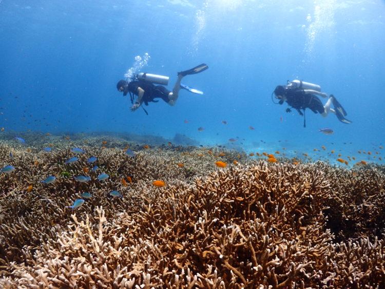 プーケットでダイビング サンゴ礁と泳ぐダイバー