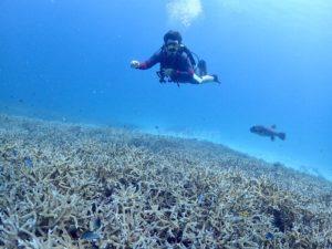 枝サンゴとダイバー