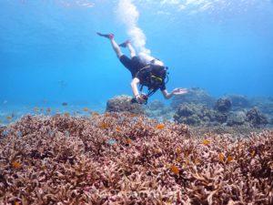 ラチャノイ島のサンゴ礁