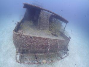 沈船に群れるキンセンフエダイ