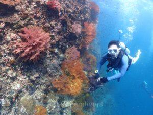 ドクマイ島