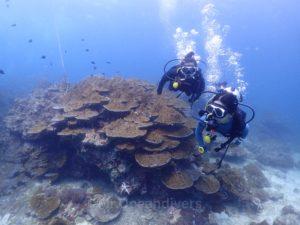 ピピ島ビダノックの水中