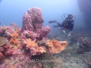 ピピ島 マッシュルームロック 水中景観