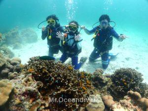ラチャノイ島 バナナベイ サンゴ