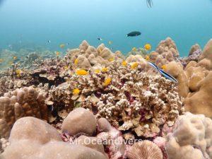 ラチャノイ島 ラチャノイベイ サンゴ