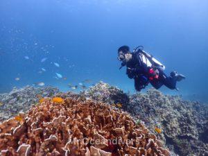 ラチャヤイ島 5mのサンゴ礁エリア