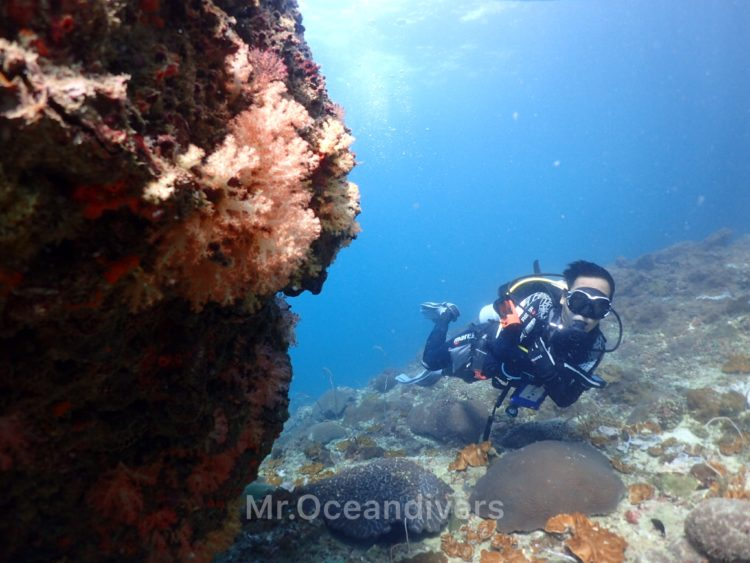 ピピ島 タートルロック サンゴ礁