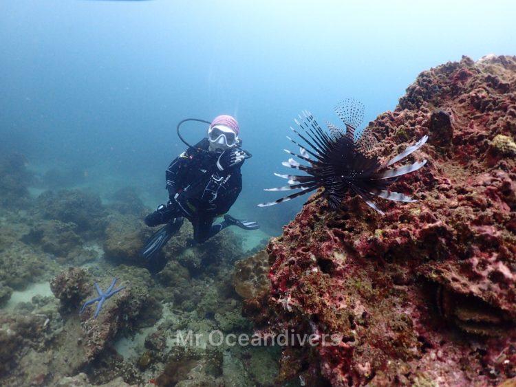 プーケットでダイビング ピピ島で見たハナミノカサゴ