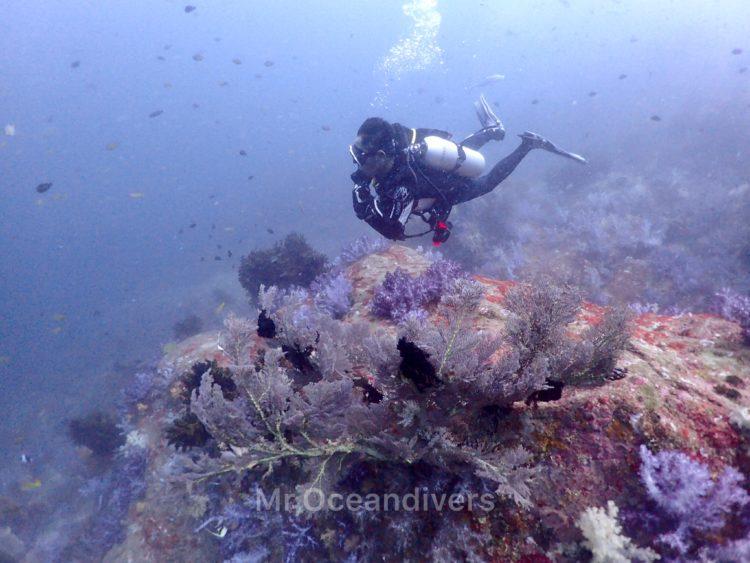 プーケットでダイビング ラチャノイ島サウスチップのサンゴ礁