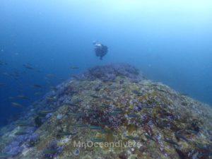 プーケットでダイビング ラチャノイ島サウスチップ の水中