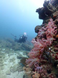プーケットでダイビング ピピ島のサンゴ