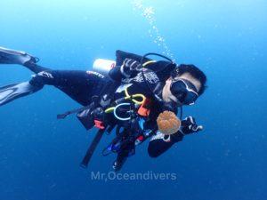プーケットでダイビング ラチャノイ島で見たクラゲ