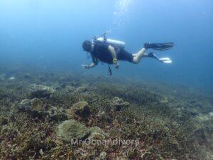 プーケットでダイビング ラチャノイ島マリーナベイのサンゴ