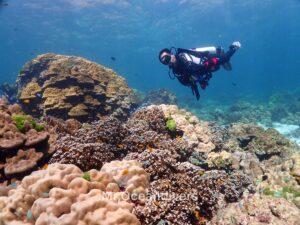 プーケットでダイビング ラチャノイ島のサンゴ礁