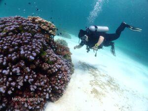 プーケットでダイビング ラチャノイ島バナナベイのサンゴ