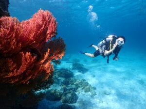 プーケットでダイビング ラチャヤイ島の浅場のサンゴ
