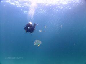 プーケットでダイビング ラチャヤイ島のツバメウオ