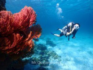 プーケットでダイビング ラチャヤイ島のサンゴ