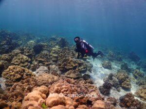 プーケットでダイビング ラチャノイ島サンゴ礁