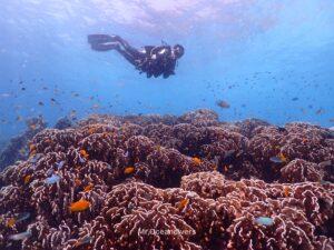 ラチャノイ島でダイビング サンゴとダイバー