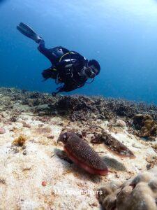 ラチャノイ島でダイビング コブシメとダイバー