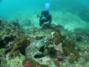 プーケットのピピ島でダイビング カメ