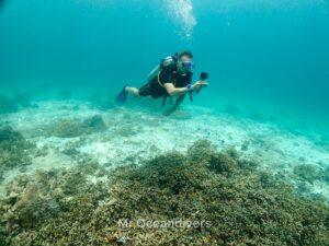 プーケットでダイビング サンゴ礁の写真を撮るダイバー