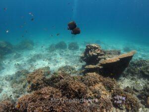 プーケットのラチャノイ島でダイビング コラーレバタフライフィッシュ