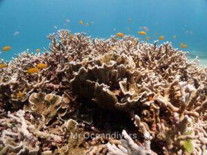 プーケットのラチャノイ島でダイビング サンゴ