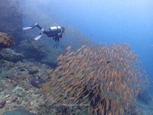 プーケットから行くピピ島でダイビング キンセンフエダイ