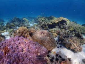 ラチャノイ島でダイビング ラチャヤイ島のサンゴ