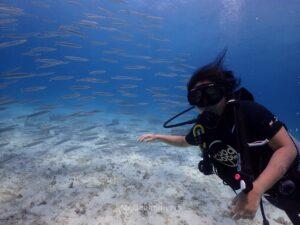 体験ダイビング ラチャノイ島 カマスとダイバー
