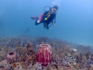 ピピ島でダイビング サンゴとダイバー