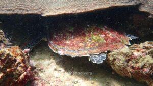 ピピ島でダイビング カメ