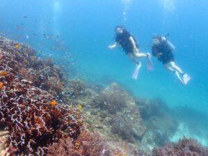 ラチャノイ島でダイビング サンゴ礁を眺めるダイバー