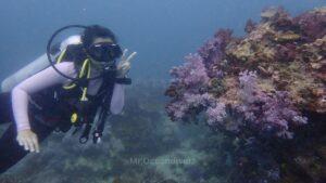 ピピ島でダイビング ウミトサカとダイバー