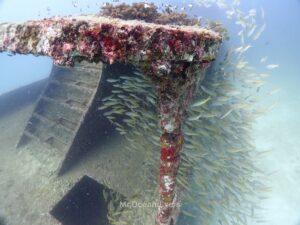 ラチャノイ島でダイビング 沈船に群れるフエダイ
