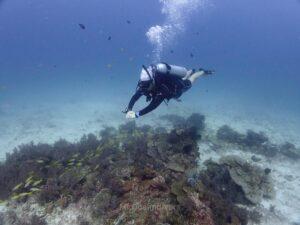 体験ダイビング ラチャノイ島 サンゴとダイバー