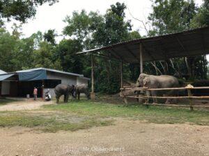 プーケットの象の施設