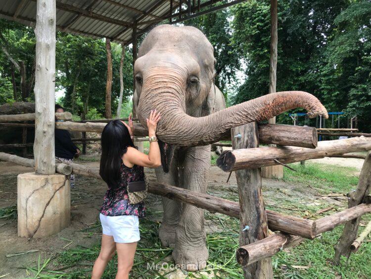 プーケットの象の施設へ餌の寄付